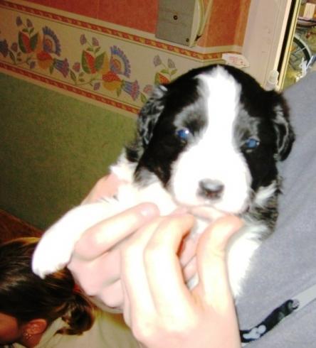 Buddy mit 3 Wochen, ist er nicht zuckersüß ??